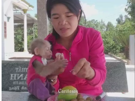 Is She Doing The Right Thing? See Photos Of How This Woman Treats Her Monkeys.