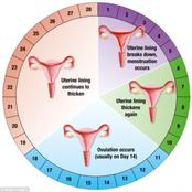 This is What Happens During the 12th Day of the Menstrual Cycle