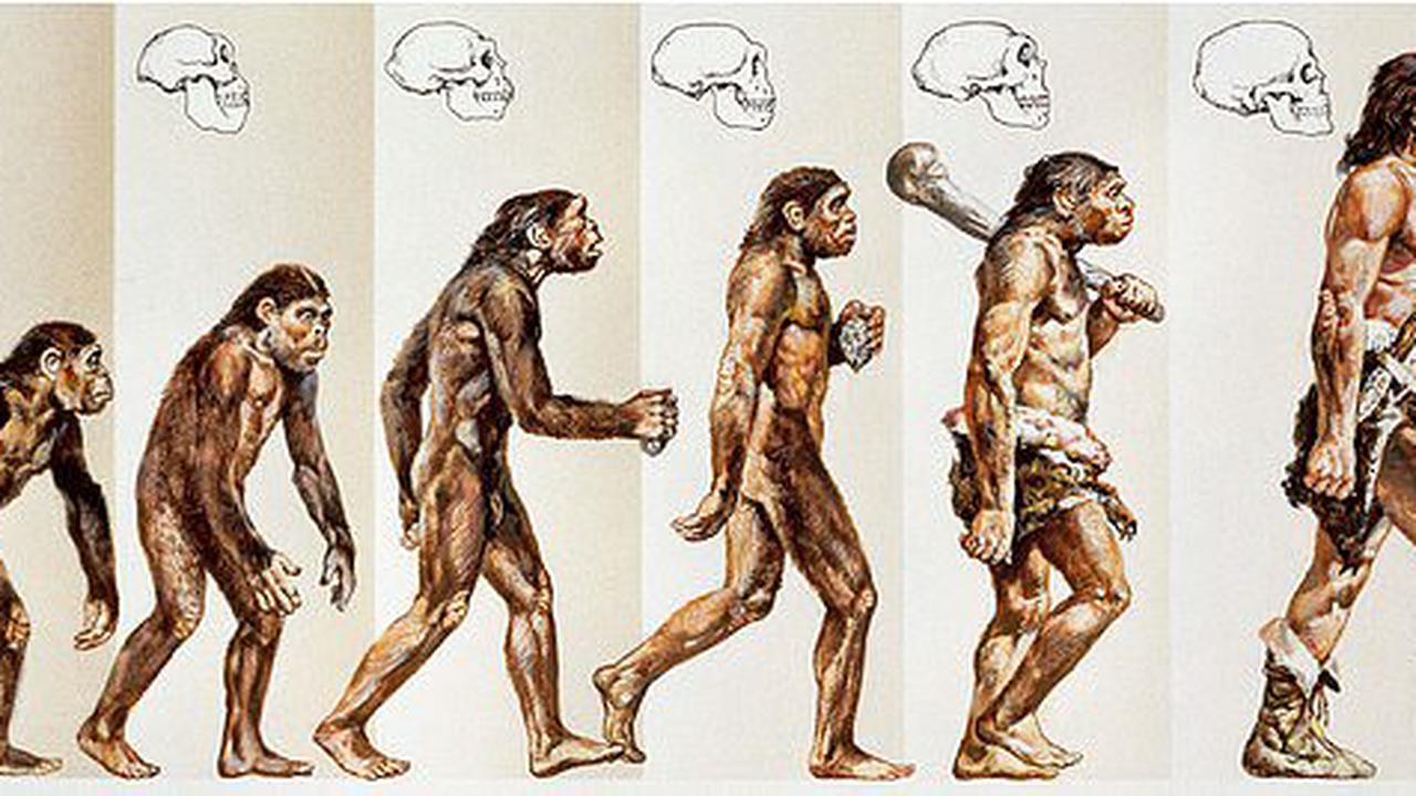 Theory of errorlution: Famous diagram showing ascent of man idea is 'so wrong' it sends leading geneticist ape