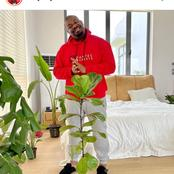 Fans reacted after Don Jazzy used plants in decorating his bedroom