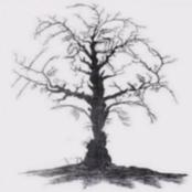 How many faces can you spot in this image? See the optical illusion that will trick your eyes