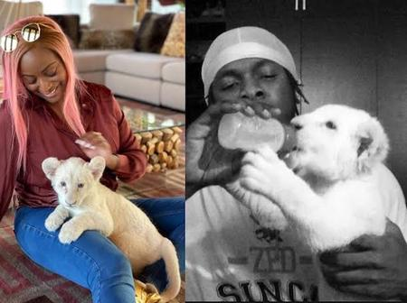Checkout Celebrities Who Own Lions As Pets (Photos)