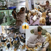 Woman Who Has 480 Cats And 12 Dogs As Pets Is Causing A Very Serious Stir Online (See Photos)
