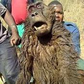 Fiction: Gogo's Monkey Killed by the community.