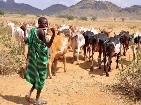The Beautiful History of Fulani Herdsmen in Nigerian
