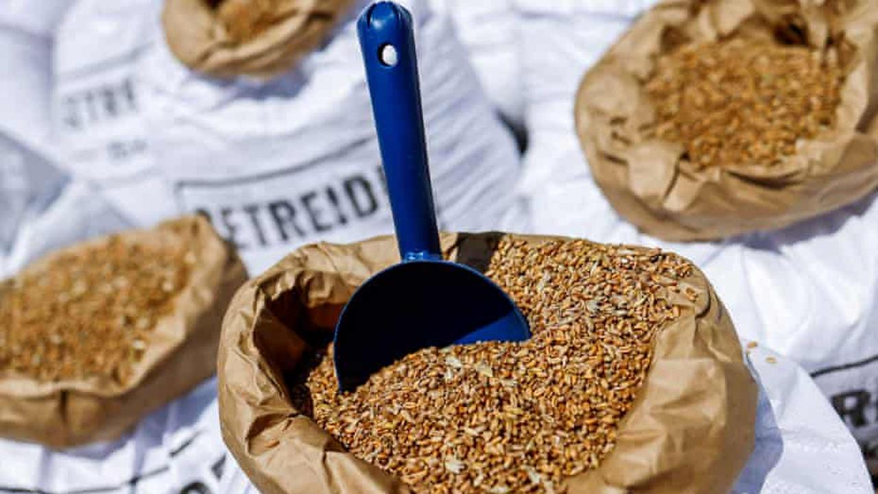 GRAINS-Corn rebounds on technical support, set for biggest weekly loss in nearly 2 yrs
