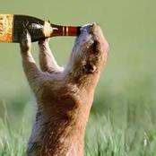 WILDLIFE: 7 Animals That Do Drink Alcoholic Substances And Get Drunk