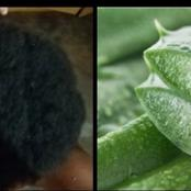 Different ways of using Aloe Vera to grow your hair.