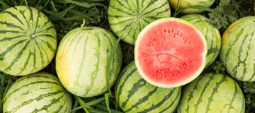 How to Grow Watermelon in Your Home Garden