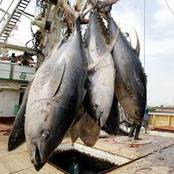 La Côte d'Ivoire devient le 2ème exportateur de thon au monde après le Japon !