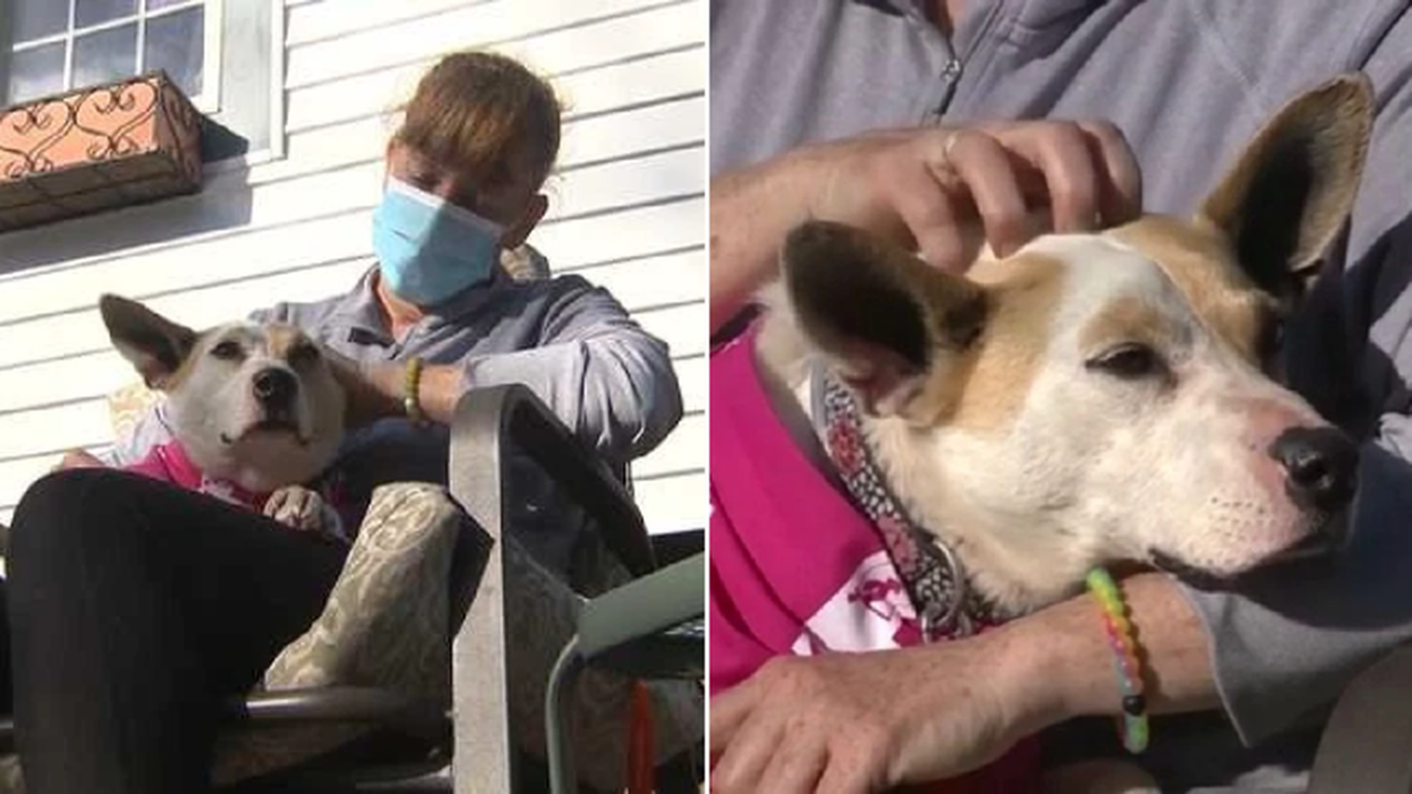 Foster dog reunited with owner five years after disappearing from pet sitter