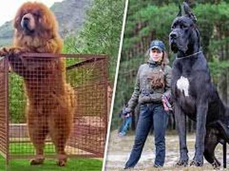 Only the bravest people can keep dogs of these breeds