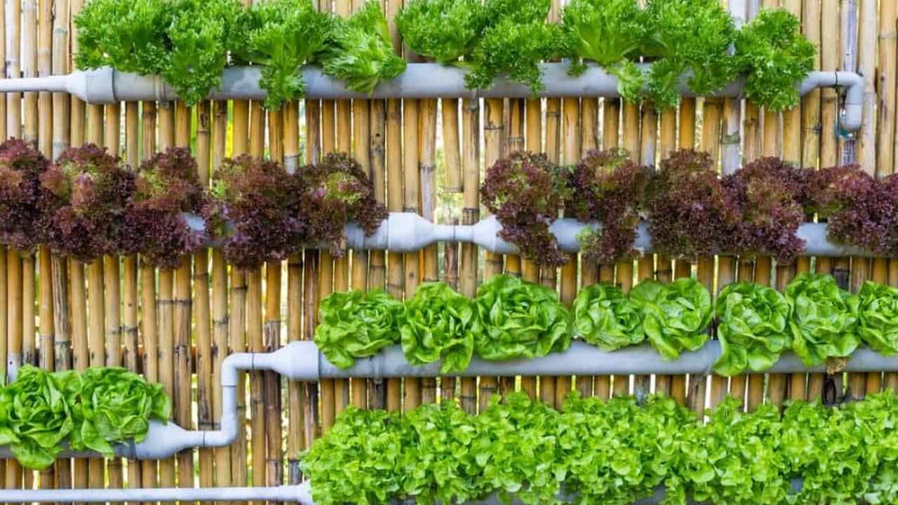 The Top 85 Vertical Garden Ideas
