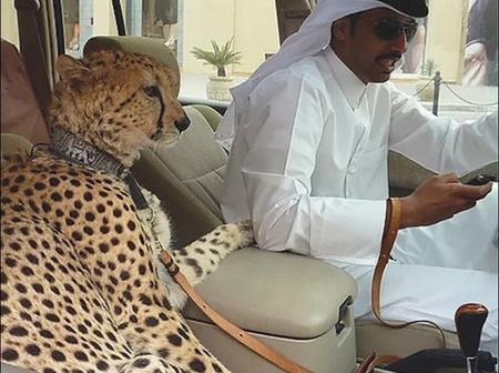 Découvrez ces 9 choses absolument étonnantes que vous verrez à Dubaï