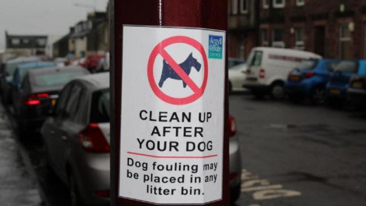 Reader letter: 'Why do dog-owners put their mess in plastic bags then drop on the ground?'