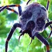 Strange But True Existing Poisonous.  Strange But True Existing Poisonous.   Spiders