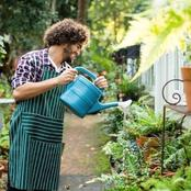 Why You Should Focus On Watering This Plant In Your Garden On a Daily Basis