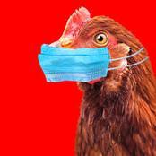 N'oublions pas la grippe aviaire svp
