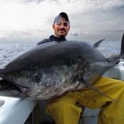 تعرف على المواد السمية التي تحويها التونة المعلبة وحقيقة تهديدها لصحتك .. وماهي الأنواع الآمنة ؟