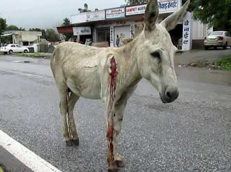 Karma in Minutes? Man Dies In A Grisly Road Accident Minutes After He Did This To A Poor Donkey