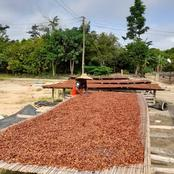 Central Regional Best Cocoa Farmer Urges Farmers To Hold The Farming Business In High Esteem