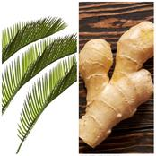 Natural Medicine To Cure Weak Erection And Short Duration With Ginger And Palm Leaf- Man Reveals