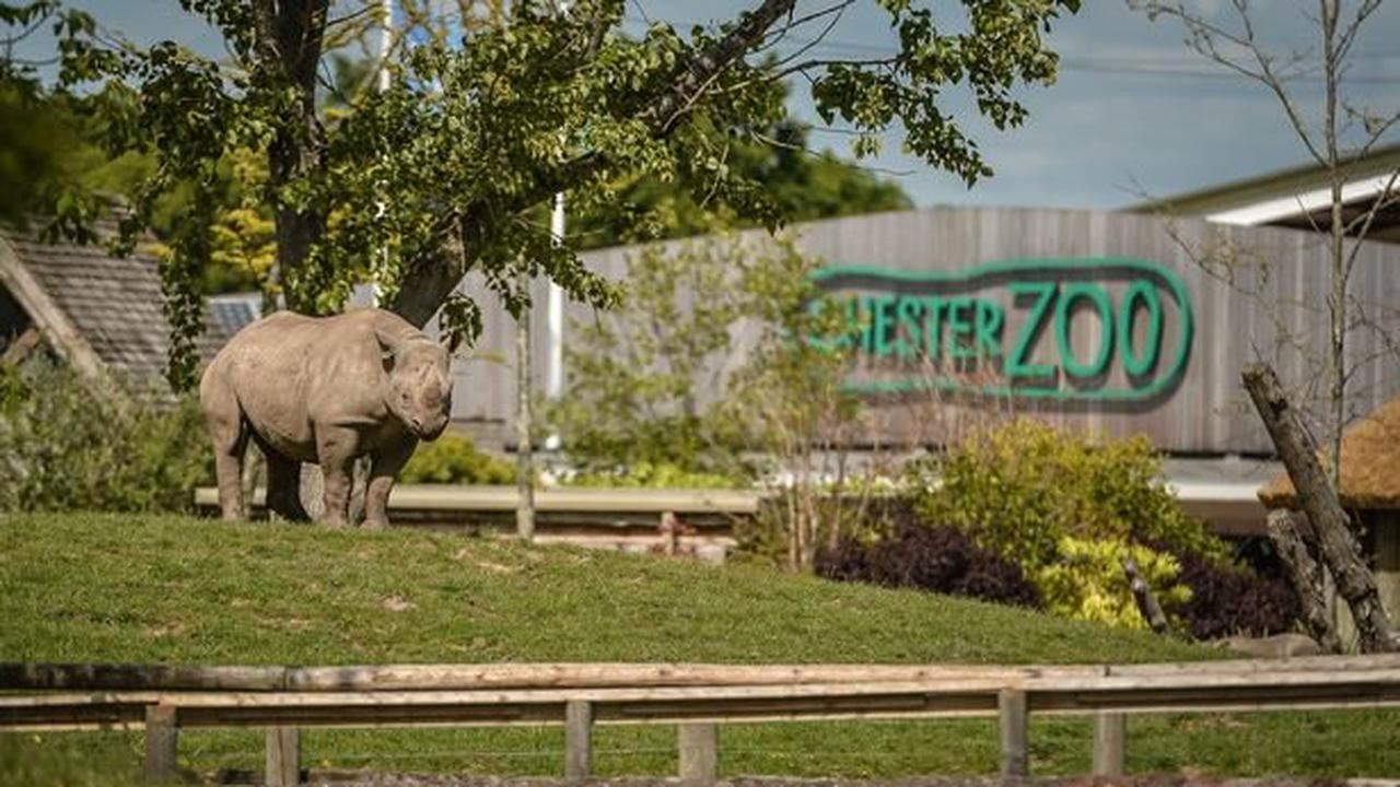 Chester Zoo website crashes in minutes as tickets go on sale