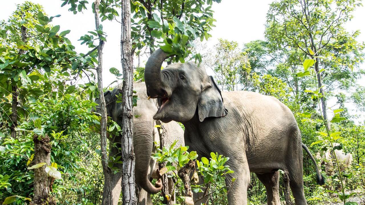 Les Animal Talks débarquent dans Planet Zoo