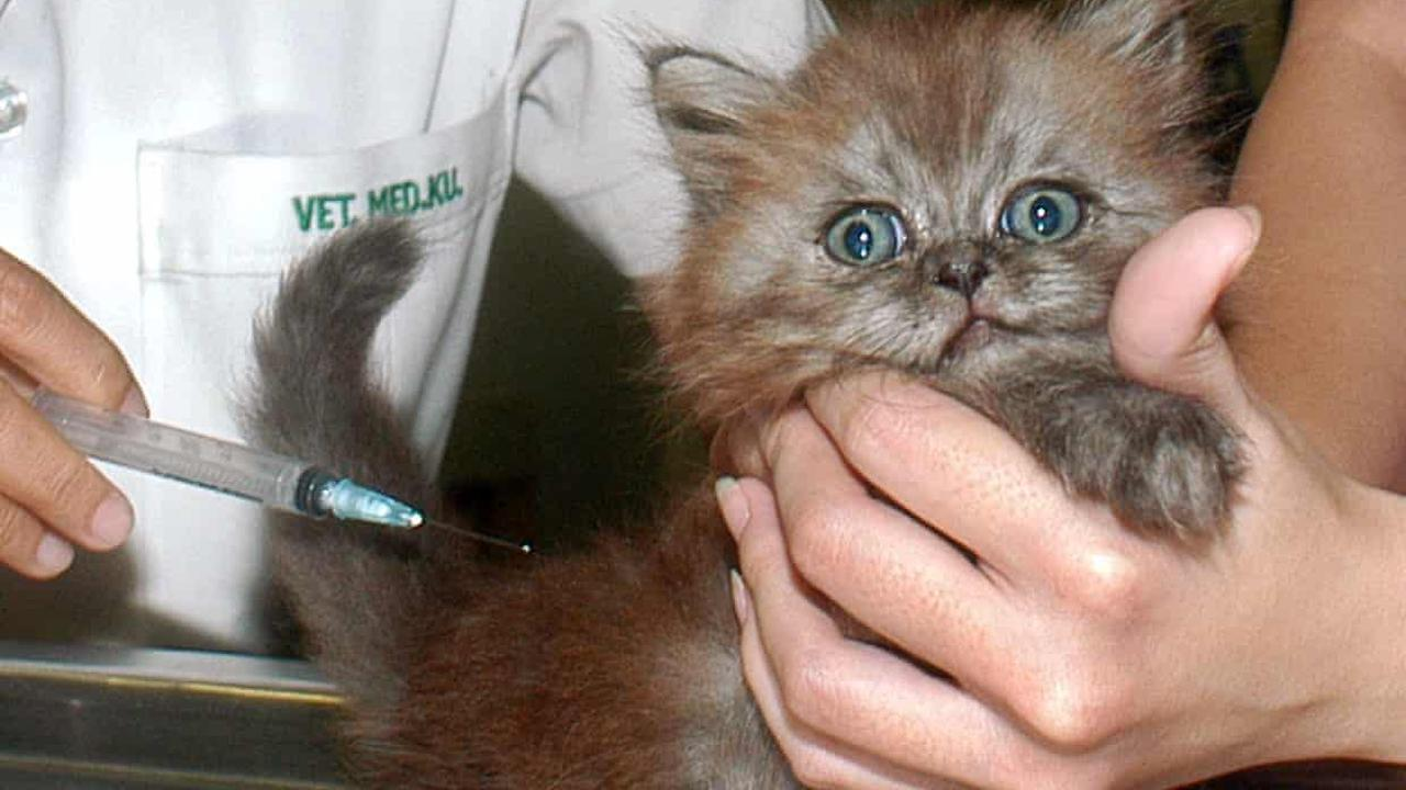 'Oh my gosh, the kittens!' How the pandemic unleashed bedlam in veterinary clinics