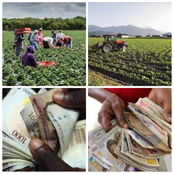 In Nigeria farmers make money from these farm crops.