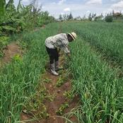 How Wavinya Ndeti Who Is making Money Through Farming In Machakos County(photos)