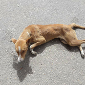 (قصة)..وجد كلب مصابًا ينبح من الآلم فقرر الرجل أخذه للمنزل والاعتناء به.. وعندما فعل هذا حدث هذا الأمر