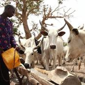 Opinion: How A Fulani Herdsman Offered Me Water On My Way To Patigi In Kwara State