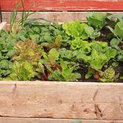 9 Fast Growing Vegetables And Herbs To Pep Up Your Pantry Menu