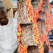 See The Price Of A Full Basket Of Tomato In Kano Which A Northerner Talked About That Stirred Reactions