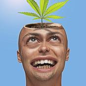 Weed And Its Effect On The Human Mind