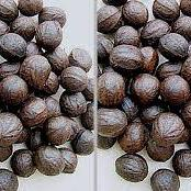 Health Benefits Of African Walnut