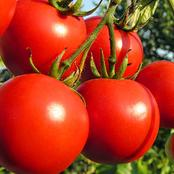 These Are The Reasons You Should Not Stop Eating Or Adding Tomatoes to Your Recipes