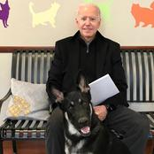 Joe Biden Fractures Foot While Playing With His Dog Promises To Send His Big Dogs