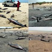 86 Dolphins Discovered Dead at the Coast of Mozambique.