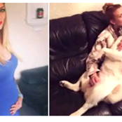 Dog who keeps Barking at Pregnant Owner's Belly Helps Uncover a Deadly Danger