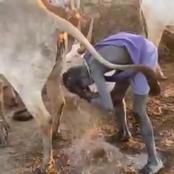 Tangatanga MP Reminded of Dams Scandal After Calling Man Bathing on Cow Urine A Hustler