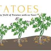 Garden Tips To Plant Potatoes