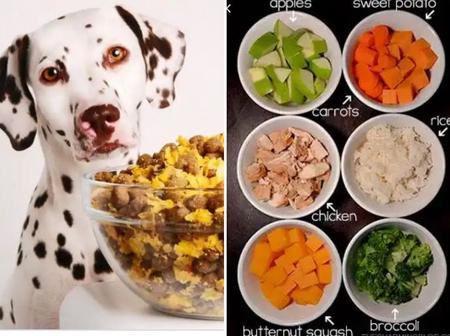 See List Of 15 Nutritious Human Foods For Your Home Pets.