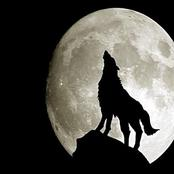 صحابي أسلم بعدما تحدث إليه الذئب فمن يكون ؟ وهذه السورة القصيرة تساوي ألف آية فما هي ؟