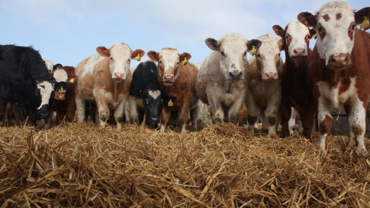 Organic meat has the same impact on the world's climate as 'normal' meat