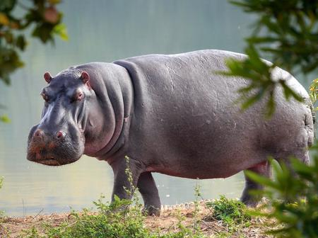 Department Of Agriculture Adds Rhino, Hippo, giraffe And Many Other Animals For Human Consumption