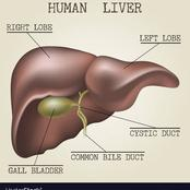 How To Improve Your Liver Function