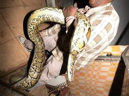 Sangoma clearly knows how to handle snakes, See what Soweto Sangoma feed his snakes