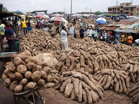 A Tuber Of Yam Cost N12k In Turkey, Chika Revealed, Praises Buhari Govt For Recognizing Agriculture